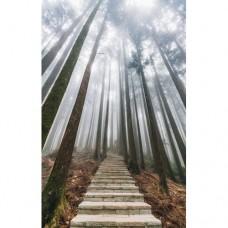 Sihirli Kağıt Doğa Temalı Tablo Gökyüzüne Tırmanış Statik Tutunma Özellikli Yapıştırma Gerektirmez 78x117cm