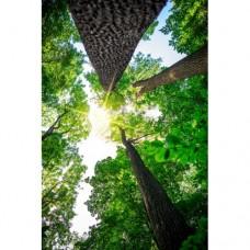 Sihirli Kağıt Doğa Temalı Tablo Gökyüzüne Yolculuk Statik Tutunma Özellikli Yapıştırma Gerektirmez 78x117cm