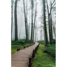 Sihirli Kağıt Doğa Temalı Tablo Sisli Orman Statik Tutunma Özellikli Yapıştırma Gerektirmez 78x117cm