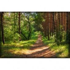Sihirli Kağıt Doğa Temalı Tablo Orman Yol Statik Tutunma Özellikli Yapıştırma Gerektirmez 175x117cm