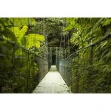 Sihirli Kağıt Doğa Temalı Tablo Asma Köprü Statik Tutunma Özellikli Yapıştırma Gerektirmez 117x78cm
