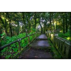 Sihirli Kağıt Doğa Temalı Tablo Orman Köprü Statik Tutunma Özellikli Yapıştırma Gerektirmez 117x78cm