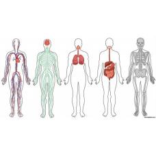 Sihirli Kağıt İnsan Vücudu Sistemleri 148x80cm