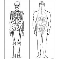 Sihirli Kağıt İnsan İskeleti ve İç Organları 140x120cm